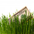 Banknote in grass — Foto Stock