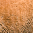 Furry skin of brown horse - Stock Photo