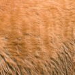 Furry skin of brown horse — Stock Photo