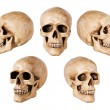 Synthetical skull on white - Stock Photo