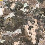 Moss on stone texture — Stock Photo #1151873