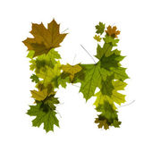 Letter from maple leaves — Stock Photo
