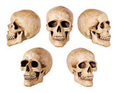 Synthetical skull on white — Stock Photo