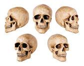 Cráneo sintético en blanco — Foto de Stock