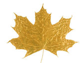 Gold maple leaf — Stock Photo