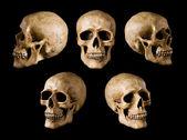 Cráneo sintético negro — Foto de Stock