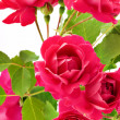 Bouquet of red roses — Stock Photo #2052072