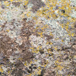 Moss on stone texture - Stock Photo