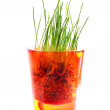 Grass bush in red candlestick - Stock Photo