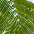 Fern green leaf - Stock Photo