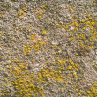 Moss on stone texture — Stock Photo