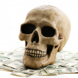 Skull with money — Stock Photo