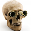 Stock Photo: Skull with money