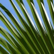 Green palm leaf — Stock fotografie