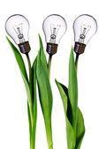 Tulipanes de bulbo de la lámpara — Foto de Stock
