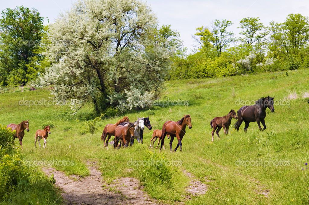 Herd of wild steppe horses on graze background — Stock Photo #2377256