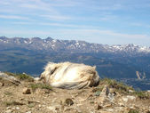 Dog at the top of the mountain — Stock Photo