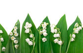 Lily of the valley on white background — Stok fotoğraf