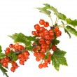 Red currant — Stock Photo #1559319