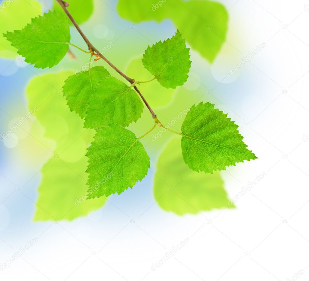 Spring leaves — Stock Photo #1863303