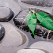 The leaves on the rocks in the sea — Stock Photo