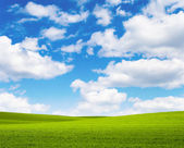 Landscape grass sky — Stock Photo