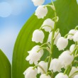 Royalty-Free Stock Photo: Lily of the valley