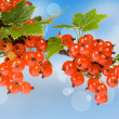 Red currant — Stock Photo #2303534