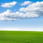 ciel herbe paysage — Photo