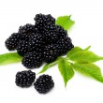 Blackberry — Stock Photo