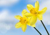 Kwiat — Zdjęcie stockowe