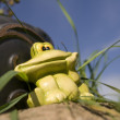 Royalty-Free Stock Photo: Frog sculpture