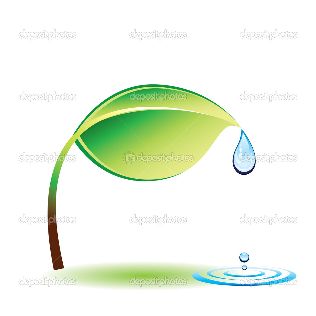 Clean water on the green leaves — Stock Vector #2449961