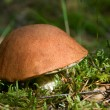 Orange cap mushroom - Stock Photo