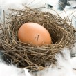 Egg in nest — Stock Photo #1075884