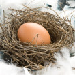Foto Stock: Egg in nest