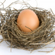 Egg in nest - Foto Stock