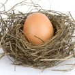 Egg in nest — Stock Photo #1075899