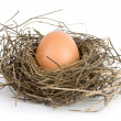 Egg in nest - Stock Photo