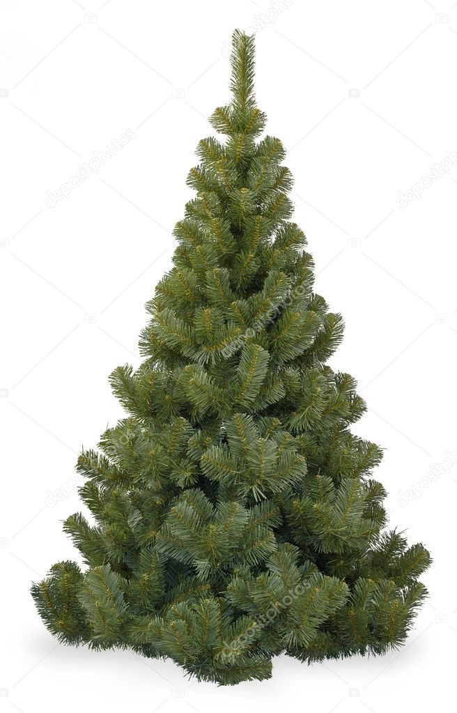 Fir tree isolated on white — Stock Photo #1141773