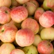 Apples — Stock Photo #1532388