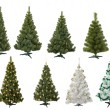 Royalty-Free Stock Photo: Christmas fur-trees