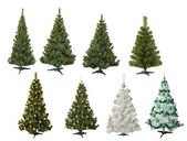 Christmas fur-trees — Stock Photo