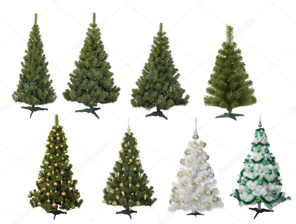 Christmas fur-trees on white — Stock Photo #1532635