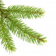 Christmas Tree — Stock Photo #1554129