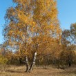 Stock Photo: Autumn.Lonely tree