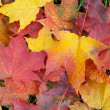 Fall foliage background - Stock Photo