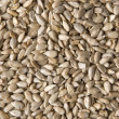 Sunflower seeds - background - Stock Photo
