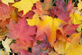 Fall foliage background — Stock Photo
