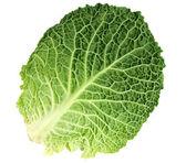 Лист спелых савойской капусты — Стоковое фото